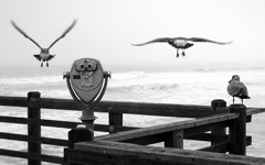 High-resolution desktop wallpaper Three Birds on a Pier by Muadeeb