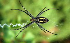High-resolution desktop wallpaper Backyard Spider by ejbdesigns