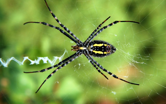 High-resolution desktop wallpaper Backyard Spider by ejbdesigns