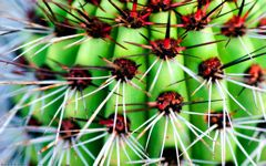 High-resolution desktop wallpaper Macro Red Cactus by Blake J. Nolan
