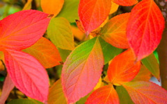 High-resolution desktop wallpaper Leaf 38 by Mike Swanson