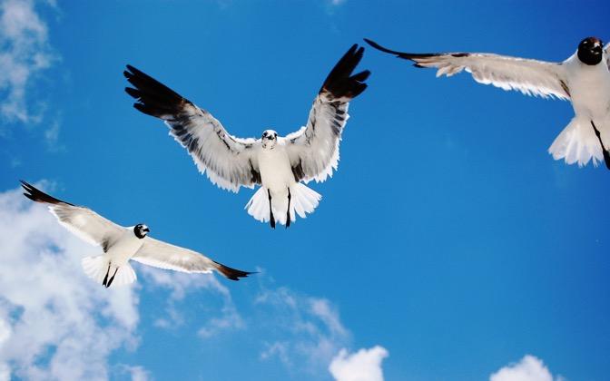 High-resolution desktop wallpaper A Flock of Seagulls by moony337