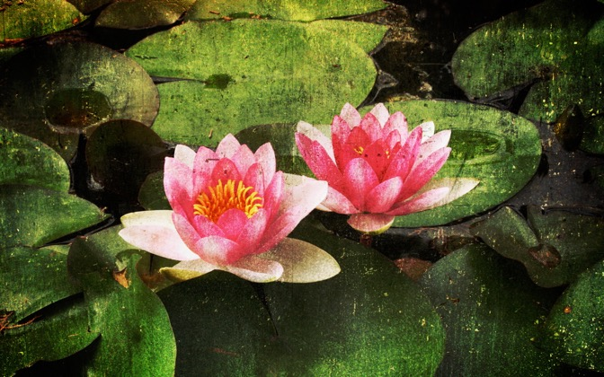 High-resolution desktop wallpaper Waterlily by Benoit Vanneuville- BeWa