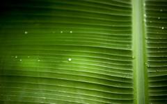 High-resolution desktop wallpaper Palm Tree by Jerome Deboudt