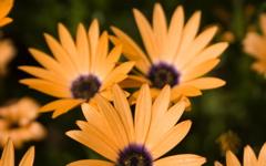 High-resolution desktop wallpaper Flowers by Jerome Deboudt