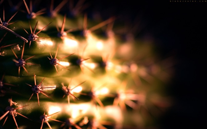 High-resolution desktop wallpaper Tired Cactus by Blake J. Nolan