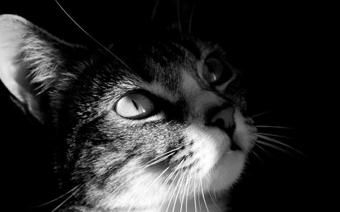 High-resolution desktop wallpaper Cat by Jerome Deboudt