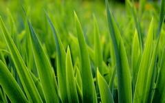 High-resolution desktop wallpaper Grass by cosmic1255