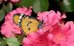 High-resolution desktop wallpaper Butterfly Effect by cosmic1255