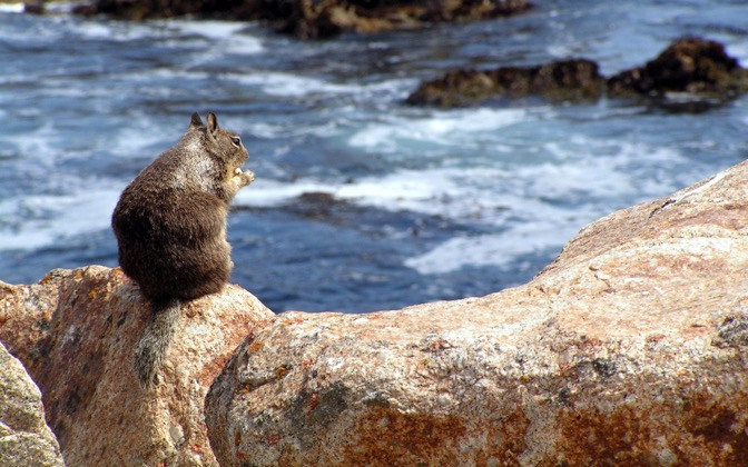 High-resolution desktop wallpaper Squirrel on a Rock by ragontona