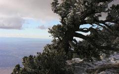 High-resolution desktop wallpaper Wind Shaped Mountain Pine by Scott Pierce Images
