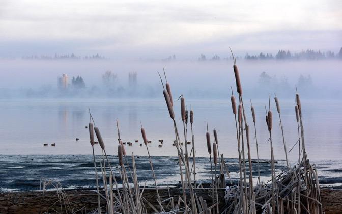 High-resolution desktop wallpaper Foggy Frost by dloubert