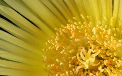 High-resolution desktop wallpaper Yellow by Lyle Krannichfeld