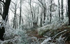 High-resolution desktop wallpaper Freezed Forest by vince_jazzy