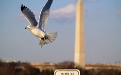 High-resolution desktop wallpaper Washington DC Gull by teeklee