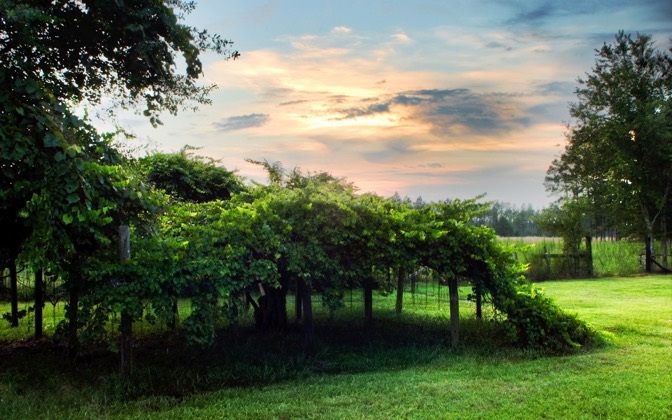 High-resolution desktop wallpaper Muscadine Arbor by TheFozz