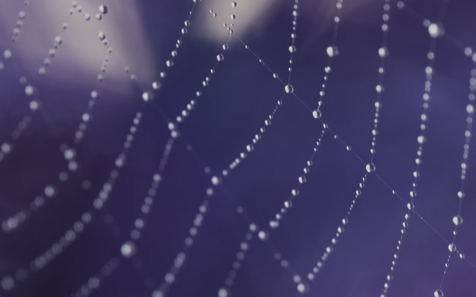 High-resolution desktop wallpaper Web Dew by AB