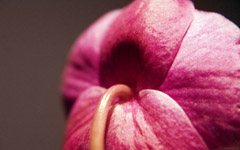 High-resolution desktop wallpaper Christine's Orchid by x1x1x1x1x1