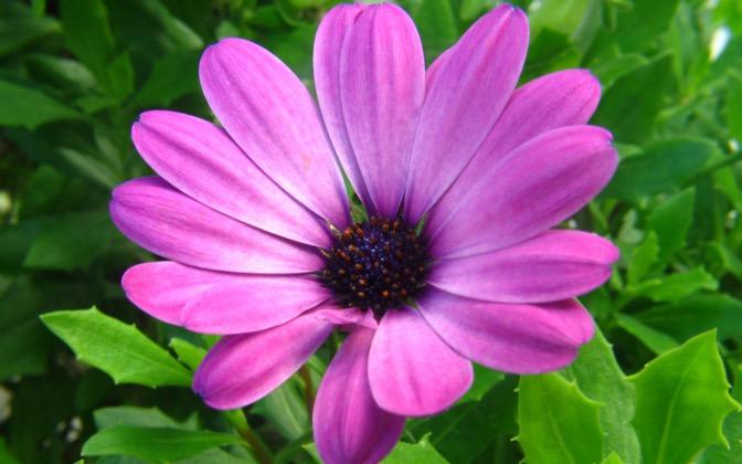 High-resolution desktop wallpaper Purple Flower by The_Jorr