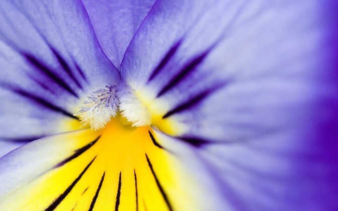 High-resolution desktop wallpaper Flower 24 by Mike Swanson