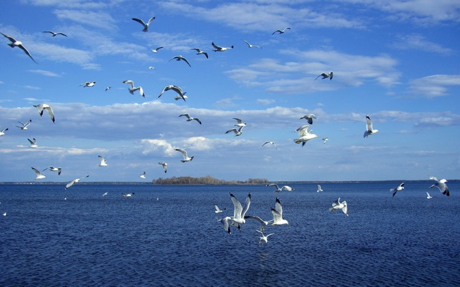 High-resolution desktop wallpaper Seagulls by KT