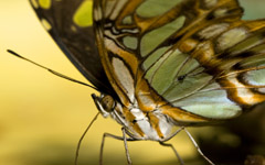 High-resolution desktop wallpaper Misc. Butterfly by Lyle Krannichfeld