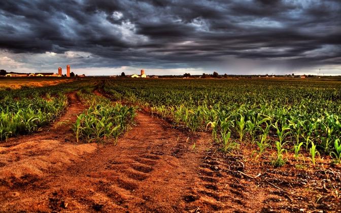 High-resolution desktop wallpaper Corn Sunset by Maxime Perron Caissy