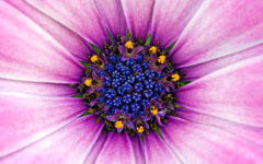 High-resolution desktop wallpaper Flower 29 by Mike Swanson