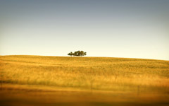High-resolution desktop wallpaper Saskatchewan's Only Trees by bpotstra