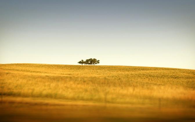 High-resolution desktop wallpaper Saskatchewan's Only Trees by bpotstra