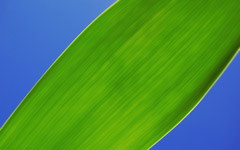 High-resolution desktop wallpaper Green Leaf by Fiep