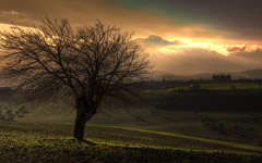 High-resolution desktop wallpaper Tree and the Mountain by Giovanni Di Gregorio