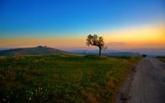 High-resolution desktop wallpaper Tree and the Sunset by Giovanni Di Gregorio