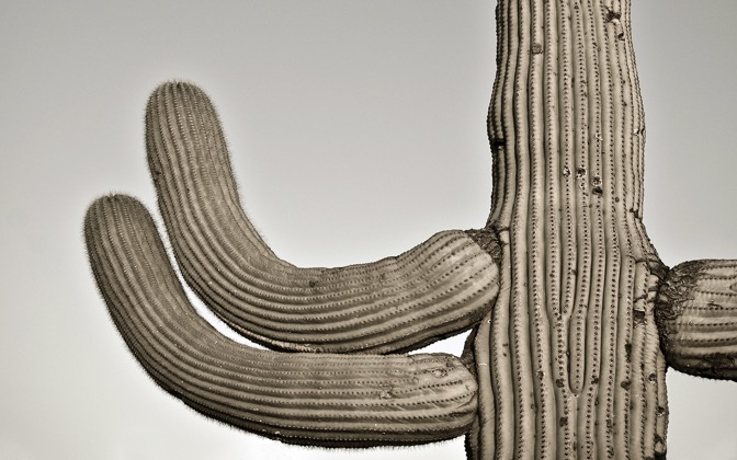High-resolution desktop wallpaper Gates Pass Saguaro by cwaggins