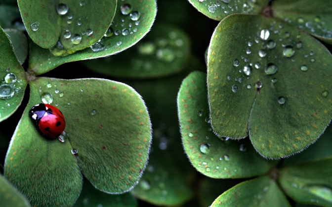 High-resolution desktop wallpaper Ladybug HDR by teeklee