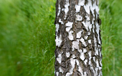 High-resolution desktop wallpaper Textured Tree by skyo