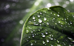 High-resolution desktop wallpaper Azores Leaf by Finn Erik