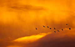High-resolution desktop wallpaper Sunset and Birds by ckeddf