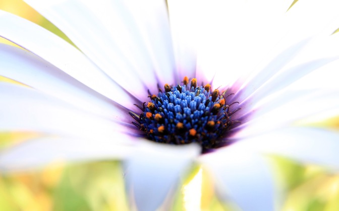 High-resolution desktop wallpaper White Beauty by Chris Gin