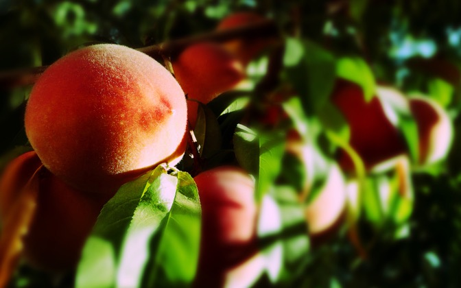 High-resolution desktop wallpaper Blurry Peaches by John Reed