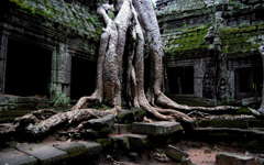 High-resolution desktop wallpaper Amazing Ta Prohm by whamuel