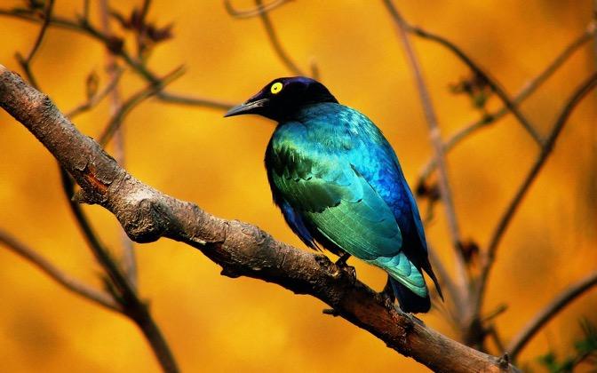 High-resolution desktop wallpaper Blue Bird by forthcoming