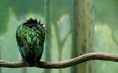 High-resolution desktop wallpaper Bird on a Branch by ajmaines