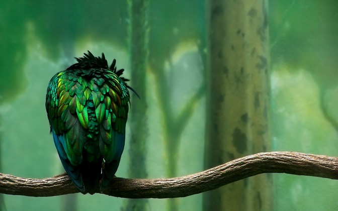 High-resolution desktop wallpaper Bird on a Branch by ajmaines