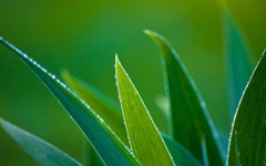 High-resolution desktop wallpaper Leaf with Water Drops by victor.svensson