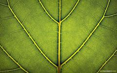High-resolution desktop wallpaper Loose Leaf by DerekProspero