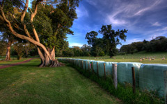 High-resolution desktop wallpaper At The Park by Chris Gin