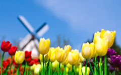 High-resolution desktop wallpaper Smell of Holland by northrop
