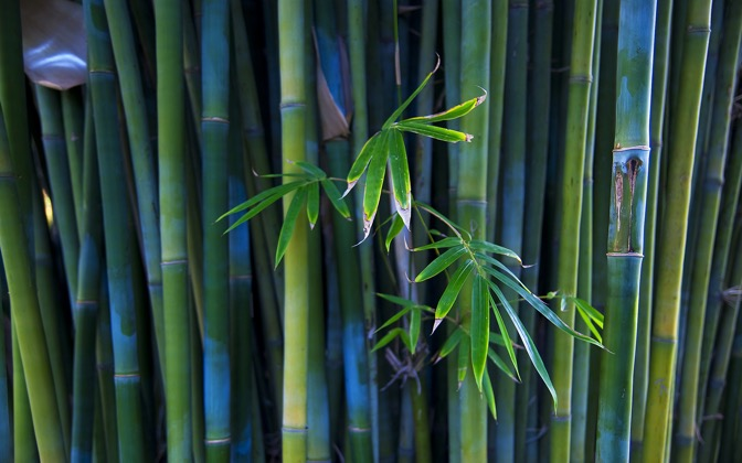 High-resolution desktop wallpaper Bamboo by hiphoper