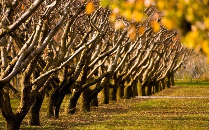 High-resolution desktop wallpaper Autumn Trees by Chris Gin